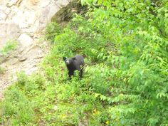 There is an abundance of wildlife in the Great Smoky Mountains National Park