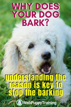 If you're a responsible dog owner, training a dog not to bark is a must. Learn the effective way on how to train your dog not to bark. #stoppuppybarkingtips #howtogetpuppytostopbarking Dog Training Techniques, Dog Training Tips, Stop Puppy Barking, Relaxed Dog, Dog Control, Alpha Dog, Aggressive Dog, Dog Behavior, Dog Owners