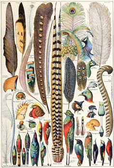 Feathers Found only on birds, feathers are some of the most complex integumentary (skin) structures found in vertebrates. There are two primary types of feathers: flight and down. Some birds, such as...