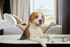 L'article hôtels chien : quand les hôtels Intercontinental ont du chien ! est apparu pour la première fois sur le site jet lag trips. Voyager en toute sérénité avec son chien? C'est trop souvent mission impossible dans l'Hexagone, où encore peu d'établissements hôteliers les […] L'article hôtels chien : quand les hôtels Intercontinental ont du chien ! est apparu pour la première fois sur le site jet lag trips.