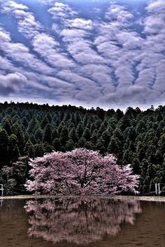 Morokino, Yoshino, Nara, Japan,