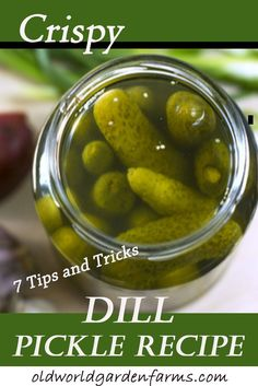 Crispy Dill Pickle Recipe - 7 Tips and Tricks For Making Pickles - Tired of soggy pickles? Learn the 7 tips and tricks to getting crunchy dill pickles! Tips And Tricks, Crispy Dill Pickle Recipe, Canning Dill Pickles, Cucumber Canning, How To Make Pickles, Canning Vegetables, Pickling Cucumbers, How To Pickle Cucumbers, Pots