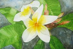 Frangipani 2 Artist Lorna Pauls Watercolour on Half sheet Bockingford paper Done April 2017 Watercolour Art, Flower Art, Wildlife, Paper, Artist, Flowers, Painting, Art Floral, Artists
