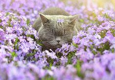 Ζώα μυρίζουν λουλούδια στις 25 ωραιότερες φωτογραφίες που θα δείτε σήμερα!