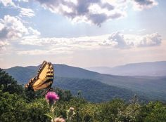 Shenandoah National Park Headquarters, Page County, Virginia - Love...