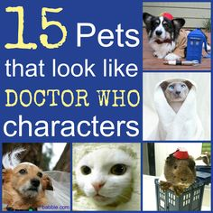 You are not alone...there are cats, dogs, and even a guinea pig that look like Doctor Who characters!