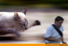 El arruina fotos perseguido por un gato gigante.