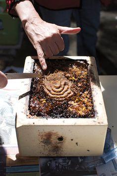 Stingless Bees – Earth Garden
