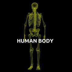 Human Body {മനുഷ്യ ശരീരം}