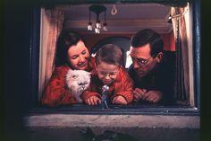 Stuart Little: Movie Pictures