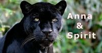 """The incredible story of how leopard Diabolo became Spirit - Anna Breytenbach, """"animal communicator"""""""