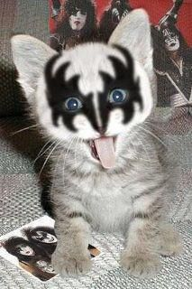 I am SO not a #cat person but this is just too damn cute! #KISS #kitten #photo