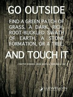 "Druids Trees:  ""Go outside; find a green patch of grass, a dark, rich root-buckled swath of earth, a stone formation, or a tree, and touch it.""  ---Timothy Roderick."