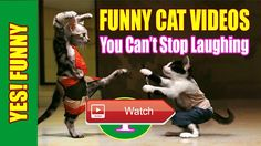 😸 Funny Cats Doing Funny Thing in Instagram Compilation 😼 THANK FOR WATCHING PLEASE SUBSCRIBE TO GET MORE NEW VIDEO 😽 from Pet Lovers 😻