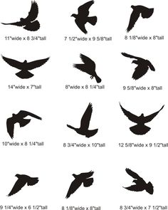 dove silhouette tattoo | Flying Dove Silhouette Pictures - possible shapes for multiple birds? Or just one on a flowing branch?