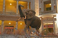 Smithsonian-Natural History