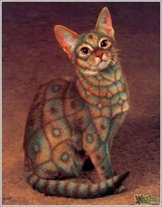 My favorite photoshopped cat