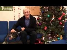 Paul O'Grady is determined to find his three-legged Staffie pal Buddy a home in time for Christmas.