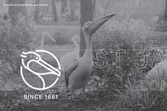 The new design rightfully places St James's in the landscape of luxury brands. Alongside bold use of type, referenced from many of the area's statues, we have crafted a brand motif for St James's – the pelican. Introduced to St James's at the exact time of its foundation, pelicans are also a treasured symbol of protection and guardianship – perfectly attuned to the work of the area's landlord and commissioning client, The Crown Estate.
