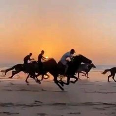 Beach Aesthetic, Aesthetic Art, Beach Rides, Horse And Human, Romantic Songs Video, Beautiful Places To Travel, Cute Love Quotes, Aesthetic Videos, Girl Gifs