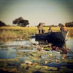 Zambia. Delta Del Okavango.