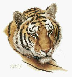 Cat Portraits by Guy Coheleach - Guy Coheleach's Animal Art Big Cats Art, Cat Art, Animal Paintings, Animal Drawings, Art Tigre, Tiger Silhouette, Tiger Sketch, Tiger Artwork, Bulldog