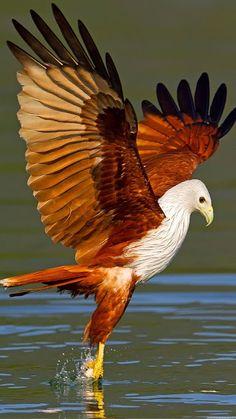 Pretty Birds, Beautiful Birds, Animals Beautiful, Eagle Pictures, Bird Pictures, Wildlife Nature, Nature Animals, Exotic Birds, Colorful Birds