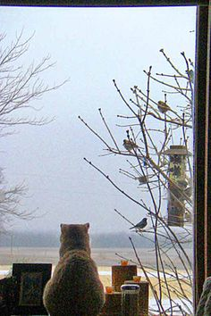"""""""My favorite journey is looking out the window."""" --Edward Gorey Crazy Cat Lady, Crazy Cats, Cat Watch, Looking Out The Window, Sleepy Cat, All About Cats, Cat Sitting, Bird Watching, Beautiful Cats"""