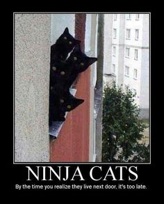 Ninja Cats. If i saw these cats staring at me like this i'd run for my life lol!