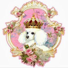 Prince Poodle - looks like my CoCo !!