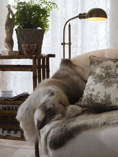 Ordinaire Fur Throw. Love How It Warms Up The White Sofa.
