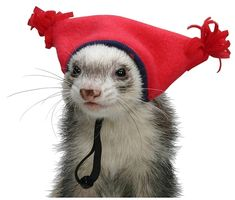 Google Ferret Hat. | 12 Foolproof Ways To Distract Yourself From Thinking About It