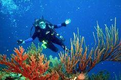 islas del rosario buceo - Buscar con Google