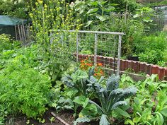 how much land is needed to be self sufficient-good ideas here...