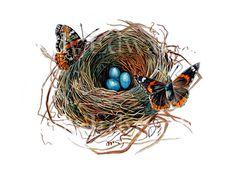 Butterfly Nest - robin's nest - Jody Edwards $25.00, via Etsy.