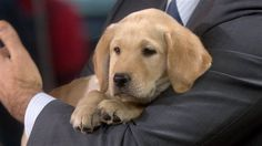 "TODAY TODAY Ch 4  ""Wrangler"" Puppy with a purpose"