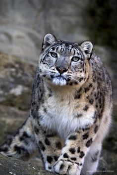 Photograph Endangered Liaisons by Stephan Brauchli on 500px