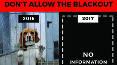 The decision to delete thousands of records related to the welfare of animals in laboratories and taking away any public access to the previous online USDA/APHIS database, ensures there is NO transparency. This is extremely dangerous and unethical, as facilities will be able to do whatever they want...
