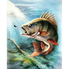 What Are Diamond Painting Custom photo? - Collections and Tips - Cartoon - Esporte ao Ar Livre Fish Artwork, Pretty Fish, Fish Logo, Fish Drawings, Fishing Pictures, Gone Fishing, Alaska Fishing, Fishing Rod, 5d Diamond Painting