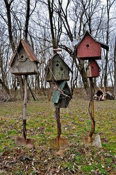 Dodo's Birdhouses in Tuscarora, Maryland By SybsPics