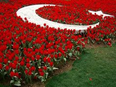 Turkish flag in flowers Ankara Wonderful Places, Beautiful Places, Turkey Culture, Turkey Flag, Turkey Country, World Thinking Day, The Beautiful Country, Turkey Travel, Famous Places