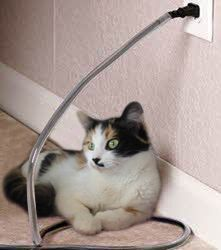 keep cats from chewing on electric cords and chargers wikihow to love your cat cats cat. Black Bedroom Furniture Sets. Home Design Ideas