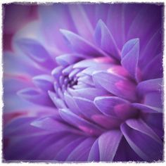 Purple Flower Photograph 4x4 Altered Art Print by quirkydame, $10.00