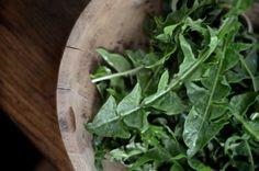 16 Dandelion Recipes | The Prairie Homestead