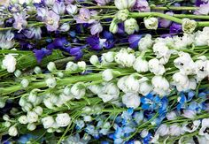 Purple, white and blue British delphiniums at New Covent Garden Flower Market during British Flowers Week 2013