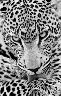 This would be a great addition to my black and white chalk drawings...if only I could figure out those eyes..