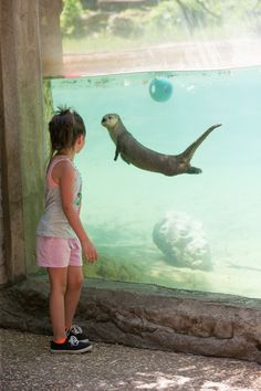 Otter and a Little Girl Stop to Get a Good Look at Each Other