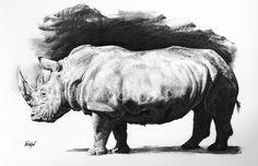 Etude de Rhinocéros - Drawing, 50x65 cm ©2012 par Drochon - Dessin, Autre