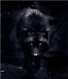 Really want a wolf tattoo!