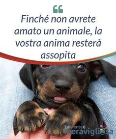 Finché non avrete amato un animale, la vostra anima resterà assopita. Finché non #scoprirete cosa vuol dire #amare un #animale, non potrete capire cosa sia la #magnanimità e cosa significhi vivere certe #emozioni.